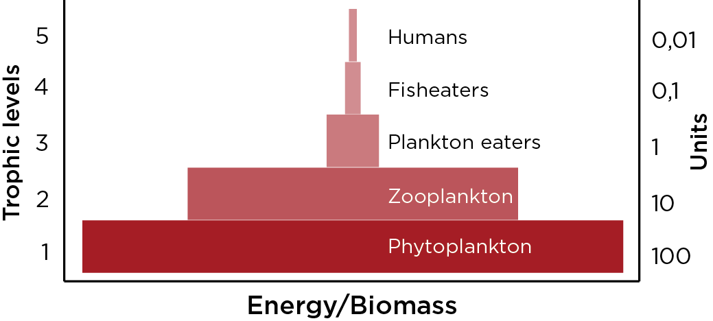 Calanus_finmarchicus_biomasse